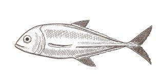 Esboço dos peixes Fotografia de Stock Royalty Free