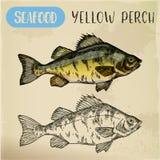 Esboço europeu da vara amarela Peixes, marisco ilustração royalty free