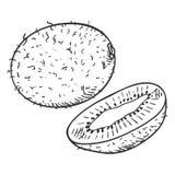 Esboço Kiwi Fruit do vetor Todo e corte imagem de stock royalty free