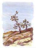Esboço nórdico da aquarela - os pinheiros nas pedras aproximam o oceano Imagem de Stock Royalty Free