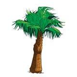 Esboço pintado palmeira do Sabal Fotos de Stock