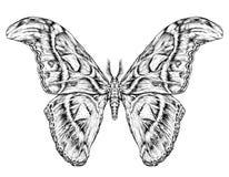 Esboço realístico detalhado de uma borboleta/traça Imagem de Stock Royalty Free