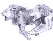 Esboço running dobro do leão Ilustração do Vetor