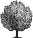 Esboço simples de um vetor da árvore Fotografia de Stock Royalty Free