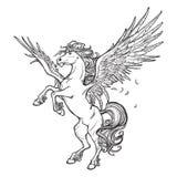 Esboço sobrenatural do animal de Pegasus no fundo branco Imagem de Stock Royalty Free