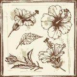 Esboço tirado mão de flores do hibiscus ilustração do vetor