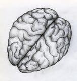 Esboço tirado mão do cérebro humano ilustração royalty free