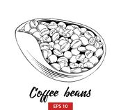 Esboço tirado mão dos feijões de café em preto isolados no fundo branco Desenho detalhado do estilo gravura a água-forte do vinta ilustração do vetor