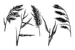 Esboço tirado Reed Hand ilustração stock