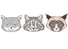 Esboços coloridos das cabeças do gato Retratos dos gatos no fundo branco ilustração royalty free