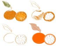 Esboços da tangerina isolados Imagem de Stock