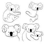 Esboços das coalas no fundo branco Linha artes de coalas ilustração do vetor