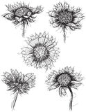 Esboços do Wildflower Fotografia de Stock