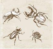 Esboços dos besouros Desenhado à mão com tinta mim Fotografia de Stock Royalty Free