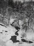 Esboços preto e branco da floresta nevado do inverno em Rússia foto de stock royalty free