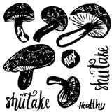 Esboce a ilustração tirada mão do vetor dos cogumelos do shiitake isolada no fundo branco com rotulação Jogo dos cogumelos Fotografia de Stock Royalty Free