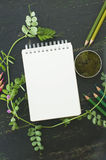 Esboce o livro, o musgo e os lápis da cor em tons verdes Foto de Stock