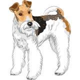 Esboce a posição da raça do Fox Terrier do fio do cão ilustração do vetor