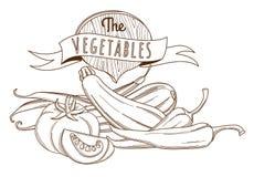 Esboce a vida tirada mão do vegetal do esboço ainda (estilo liso, fino Fotos de Stock Royalty Free