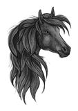 Esboço da cabeça de cavalo preta do puro-sangue Imagem de Stock