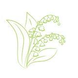 Esboço de um lírio da flor do vale Fotos de Stock Royalty Free