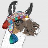 Esboço do vetor da alpaca Fotografia de Stock