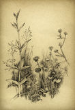 Esboço floral Foto de Stock Royalty Free