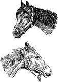 Esboços das cabeças de cavalos Foto de Stock Royalty Free