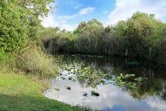 Escénico de pantanos en parque nacional fotos de archivo