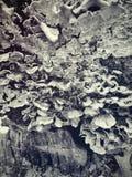 esca della foresta Fotografia Stock