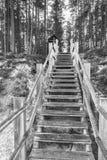 Escada à civilização Imagem de Stock Royalty Free