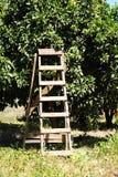 Escada a colher Fotografia de Stock