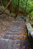 A escada de pedra na floresta no soro de leite coalhado cai parque estadual Imagens de Stock