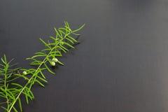 Escada do alimento Imagens de Stock Royalty Free