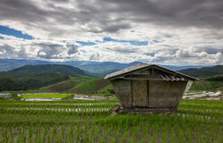 Escada do campo do arroz Imagens de Stock
