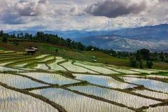 Escada do campo do arroz Imagem de Stock