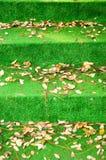 Escada em um dia do outono Imagens de Stock