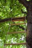 Escada em uma árvore Foto de Stock Royalty Free
