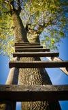 Escada em uma árvore Fotos de Stock