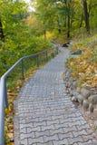 Escada no parque do outono. Imagens de Stock