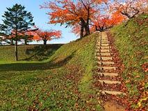 Escada, pinheiro e bordo de madeira da natureza com céu azul Foto de Stock Royalty Free