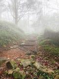 Escadaria ao céu em um dia, em uma floresta e em uma névoa nevoentos Imagem de Stock