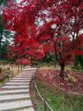 Escadaria ao céu, folha do outono em Coreia foto de stock