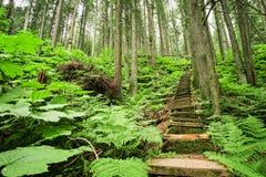 Escadaria através da floresta foto de stock