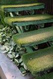 Escadaria da grama verde no jardim, decoração interior Fotografia de Stock