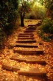 Escadaria da natureza Fotografia de Stock