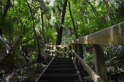 Escadaria de madeira através da selva imagem de stock royalty free