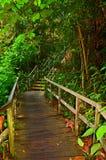 Escadaria de madeira na floresta fotos de stock