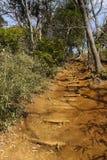 Escadaria de madeira na inclinação de montanha Foto de Stock