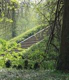 escadaria de pedra antiga na floresta imagem de stock